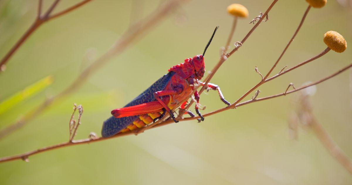 Gigantic plague of locusts threatens deadly famine across sub-Saharan Africa